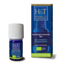 Angélique racine Bio H&T
