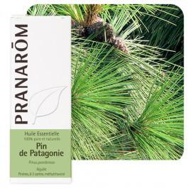 Pin de Patagonie