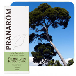 Huile essentielle Pin maritime - térébenthine Pranarom