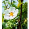 Huile essentielle ciste ladanifère bio