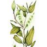 Huile essentielle niaouli bio