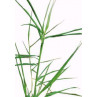Huile essentielle palmarosa bio