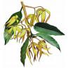 Huile essentielle ylang ylang totum bio