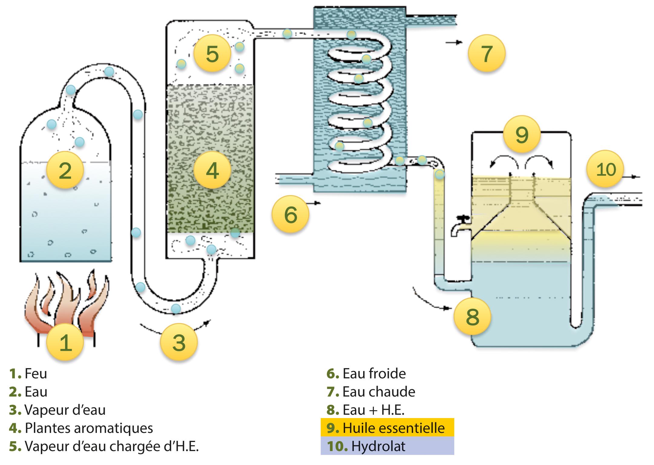 Distillation des huiles essentielles et des hydrolats